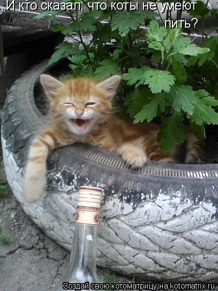 Котоматрица: И кто сказал, что коты не умеют пить?