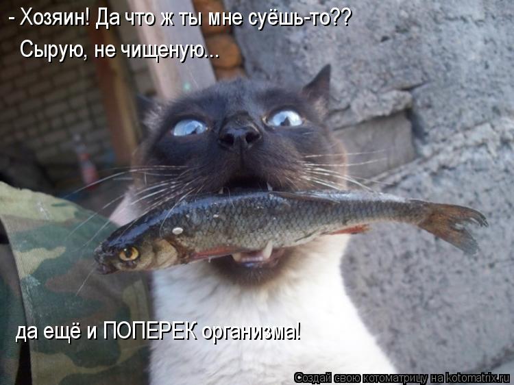 Котоматрица: - Хозяин! Да что ж ты мне суёшь-то?? Сырую, не чищеную... да ещё и ПОПЕРЕК организма!