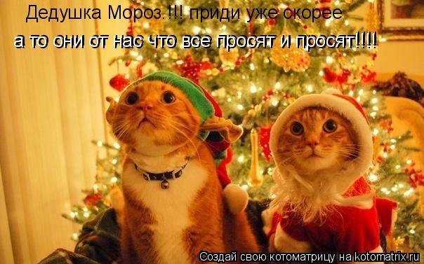 Котоматрица: Дедушка Мороз.!!! приди уже скорее а то они от нас что все просят и просят!!!! а то они от нас что все просят и просят!!!!