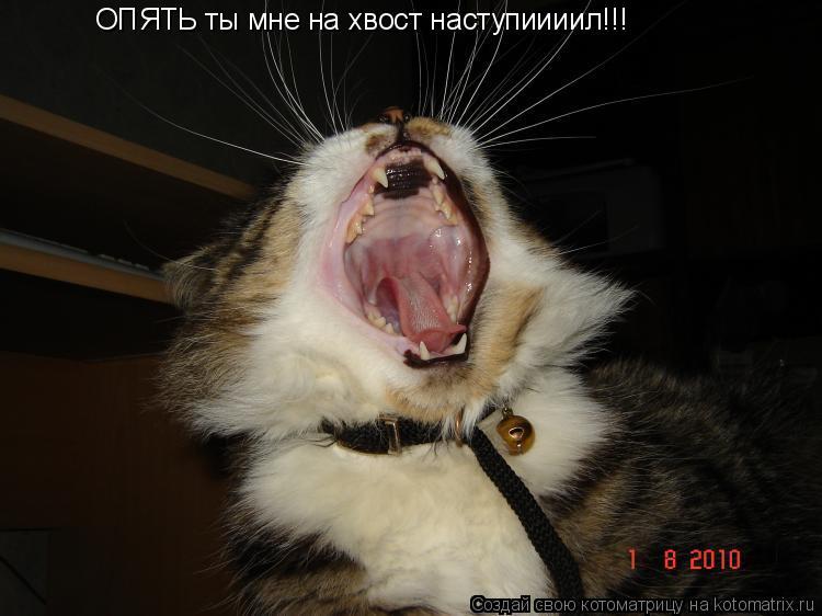 Котоматрица: ОПЯТЬ ты мне на хвост наступиииил!!!