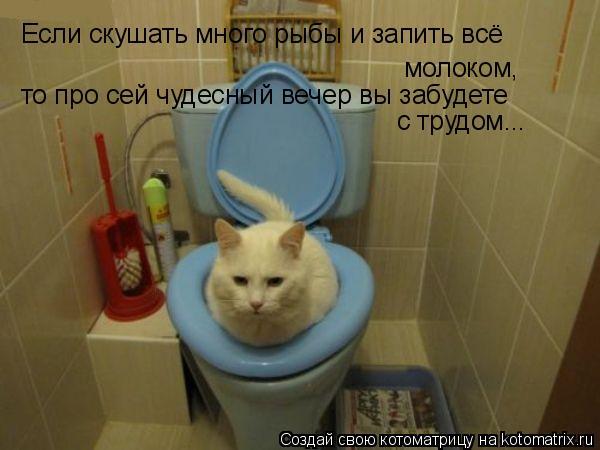 Котоматрица: Если скушать много рыбы и запить всё молоком, то про сей чудесный вечер вы забудете с трудом...