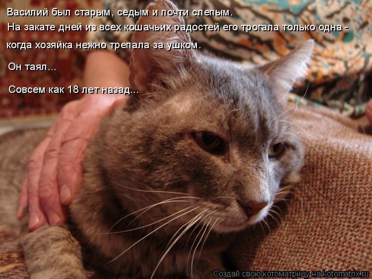 Котоматрица: Василий был старым, седым и почти слепым. На закате дней из всех кошачьих радостей его трогала только одна -  когда хозяйка нежно трепала за