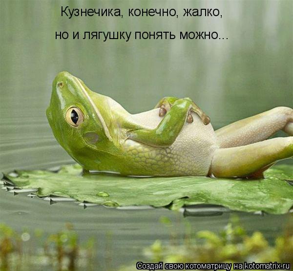 Котоматрица: Кузнечика, конечно, жалко, но и лягушку понять можно...
