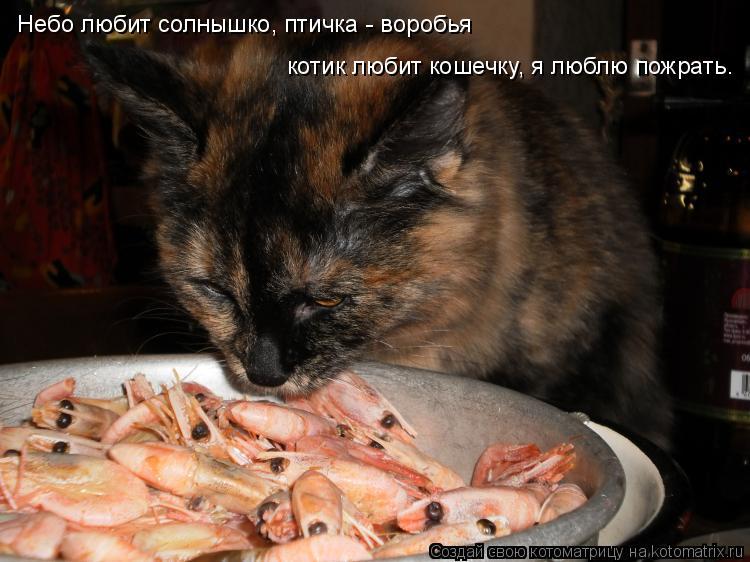Котоматрица: Небо любит солнышко, птичка - воробья, котик любит ...