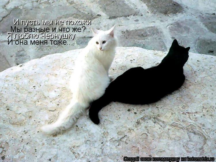 Котоматрица: И пусть мы не похожи  Мы разные и что же? Я люблю Чернушку И она меня тоже...