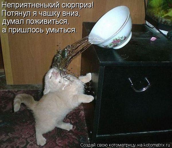 Котоматрица: Неприятненький сюрприз!  Потянул я чашку вниз, думал поживиться, а пришлось умыться.