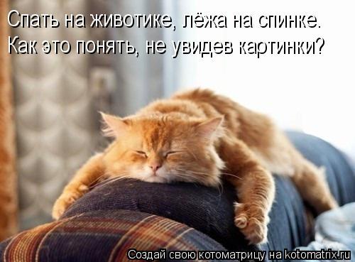 Котоматрица: Спать на животике, лёжа на спинке. Как это понять, не увидев картинки?