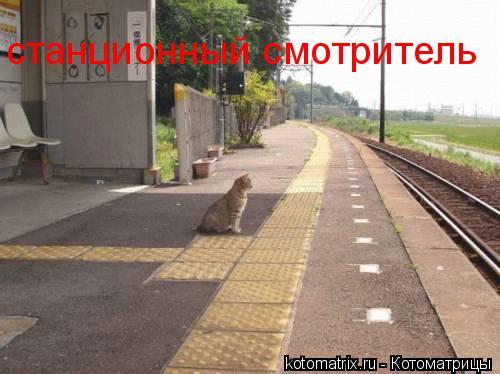 Котоматрица: станционный смотритель