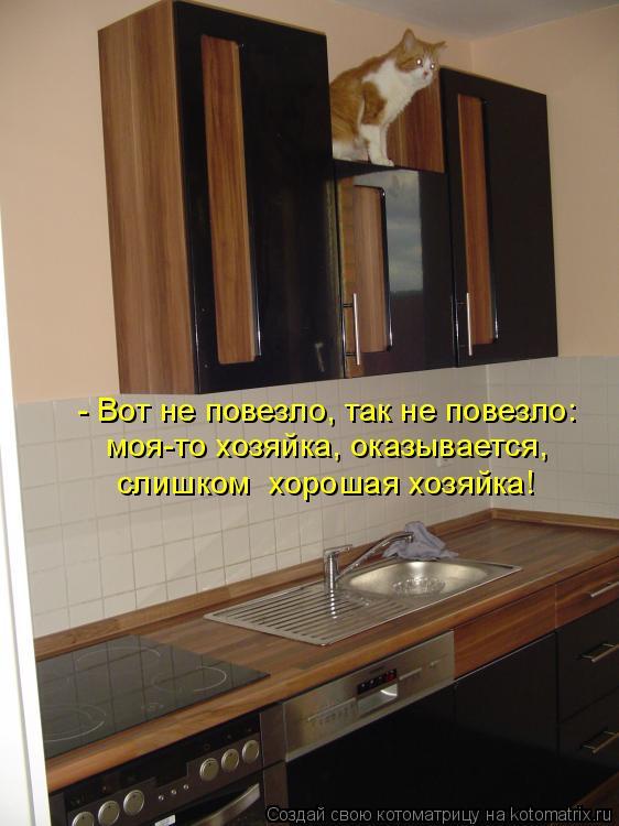 Котоматрица: - Вот не повезло, так не повезло:  моя-то хозяйка, оказывается, слишком  хорошая хозяйка!
