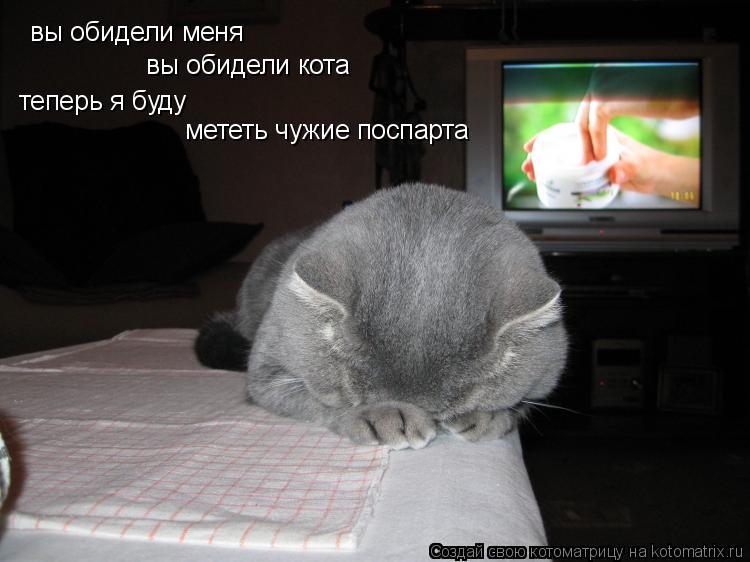 Котоматрица: вы обидели меня вы обидели кота теперь я буду  мететь чужие поспарта