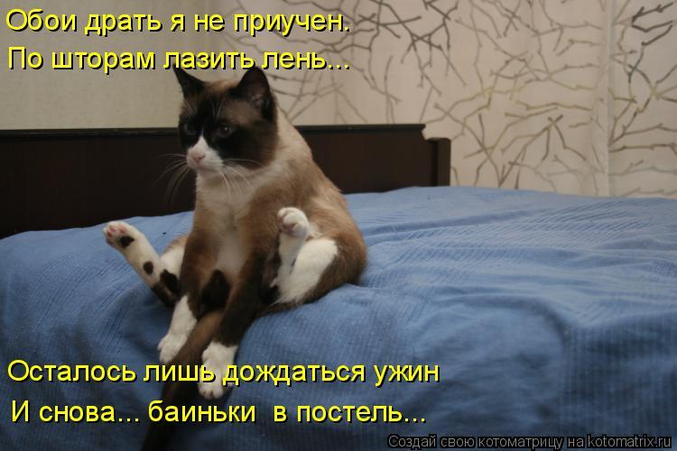 Котоматрица: Обои драть я не приучен. По шторам лазить лень... Осталось лишь дождаться ужин И снова... баиньки  в постель...