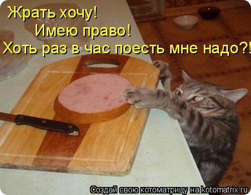 Котоматрица: Жрать хочу! Имею право! Хоть раз в час поесть мне надо?!