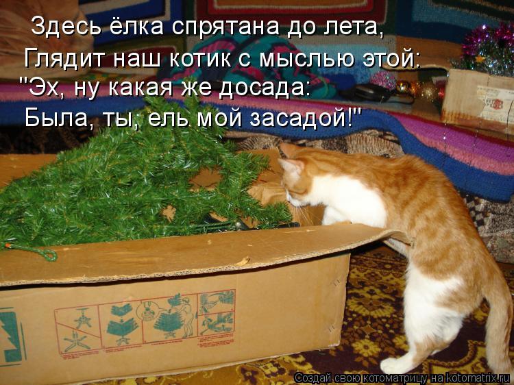 """Котоматрица: Здесь ёлка спрятана до лета, Глядит наш котик с мыслью этой: """"Эх, ну какая же досада: Была, ты, ель мой засадой!"""""""