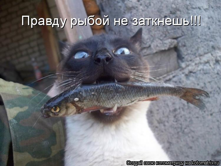 Котоматрица: Правду рыбой не заткнешь!!!