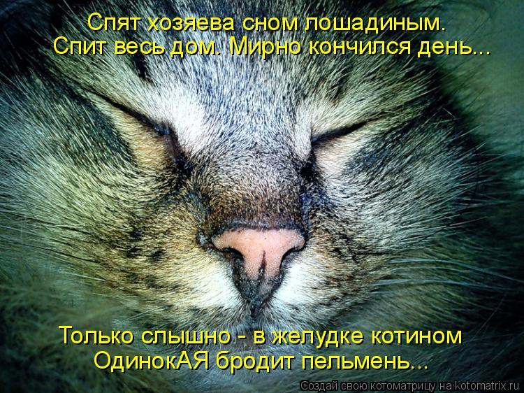 Только слышно - в желудке котином ОдинокАЯ бродит пельмень... Спят хозяева сном лошадиным. Спит весь дом. Мирно кончился день...