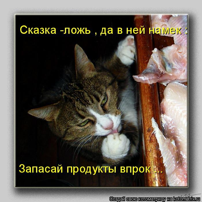Котоматрица - Сказка -ложь , да в ней намек : Запасай продукты впрок ...