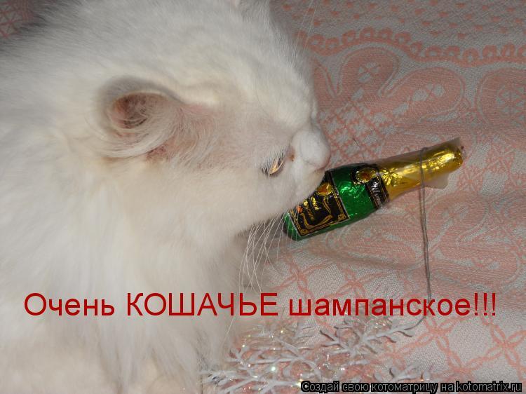 Котоматрица: Очень КОШАЧЬЕ шампанское!!!