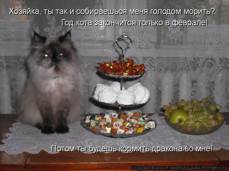 Котоматрица: Хозяйка, ты так и собираешься меня голодом морить? Год кота закончится только в феврале! Потом ты будешь кормить дракона во мне!