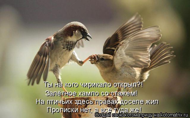 Котоматрица: Ты на кого чирикало открыл?! На птичьих здесь правах доселе жил  Прописки нет, а всё туда же! Залётное хамло со стажем!