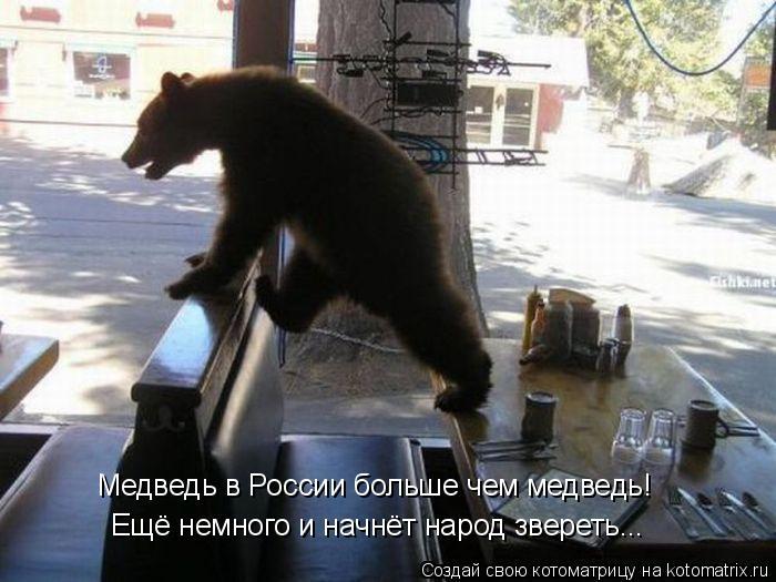 Котоматрица: Медведь в России больше чем медведь! Ещё немного и начнёт народ звереть...