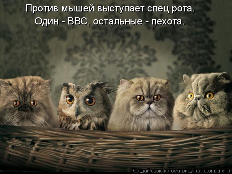 Котоматриця!)))) - Страница 9 1085147