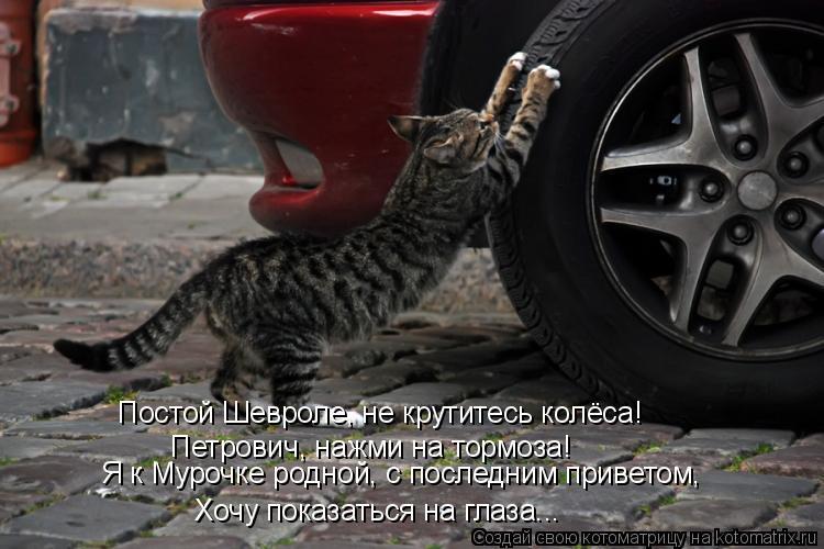 Котоматрица: Постой Шевроле, не крутитесь колёса! Я к Мурочке родной, с последним приветом, Петрович, нажми на тормоза! Хочу показаться на глаза...