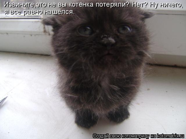 Котоматрица: Извините,это не вы котёнка потеряли? Нет? Ну ничего,  я все равно нашёлся.