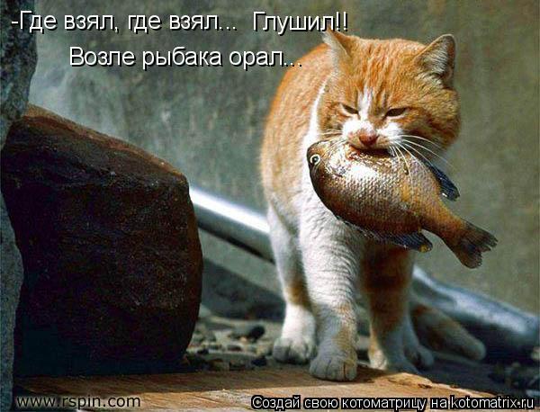 Котоматрица: -Где взял, где взял...  Глушил!! Возле рыбака орал...