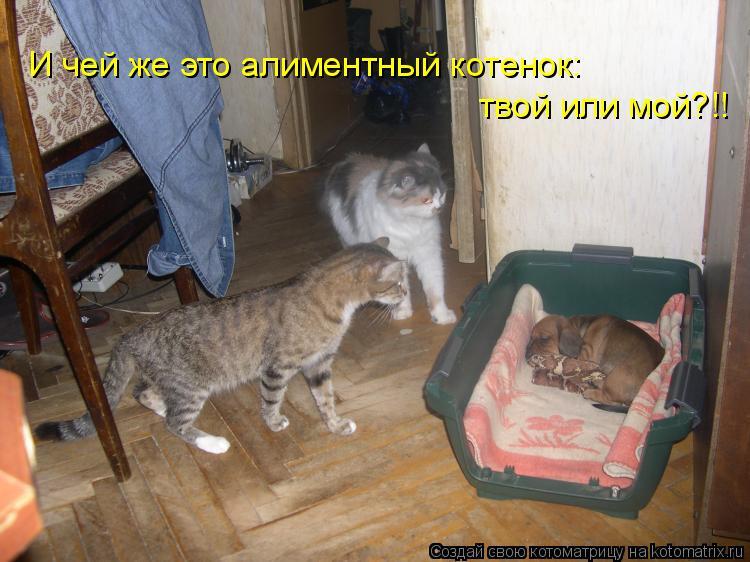 Котоматрица: И чей же это алиментный котенок: твой или мой?!!