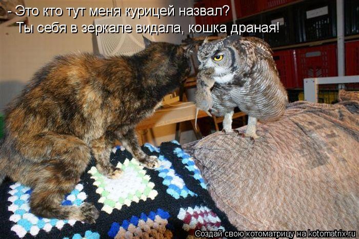 Котоматрица: - Это кто тут меня курицей назвал? Ты себя в зеркале видала, кошка драная!