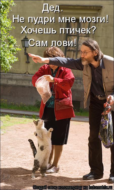 Котоматрица: Дед. Не пудри мне мозги! Хочешь птичек? Сам лови!