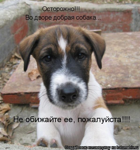 Котоматрица: Осторожно!!! Во дворе добрая собака... Не обижайте ее, пожалуйста!!!!