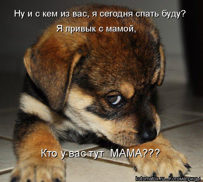 Котоматрица: Ну и с кем из вас, я сегодня спать буду? Я привык с мамой, Кто у вас тут  МАМА???