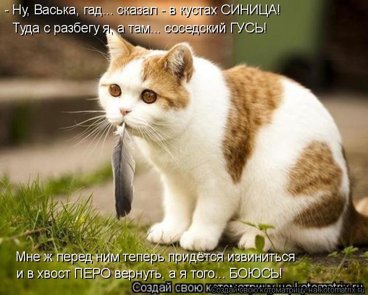 Котоматрица: - Ну, Васька, гад... сказал - в кустах СИНИЦА! Туда с разбегу я, а там... соседский ГУСЬ! Мне ж перед ним теперь придётся извиниться и в хвост ПЕРО