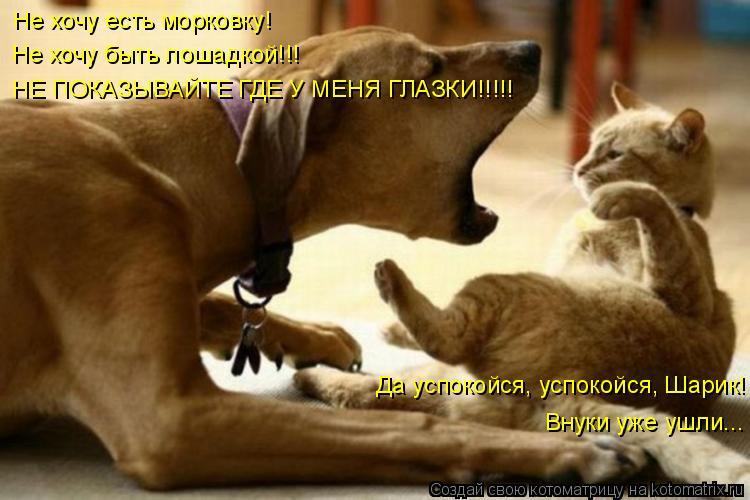 Котоматрица: Не хочу есть морковку! Не хочу быть лошадкой!!! НЕ ПОКАЗЫВАЙТЕ ГДЕ У МЕНЯ ГЛАЗКИ!!!!! Да успокойся, успокойся, Шарик! Внуки уже ушли...