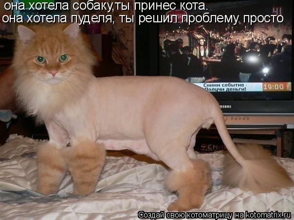Котоматрица: она хотела собаку,ты принес кота. она хотела пуделя, ты решил проблему  просто