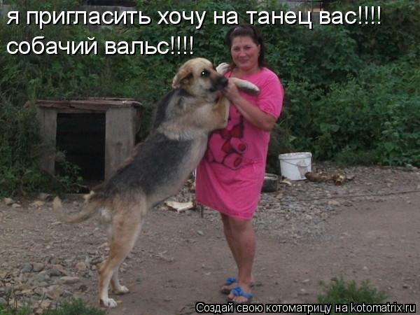 Котоматрица: я пригласить хочу на танец вас!!!! собачий вальс!!!!