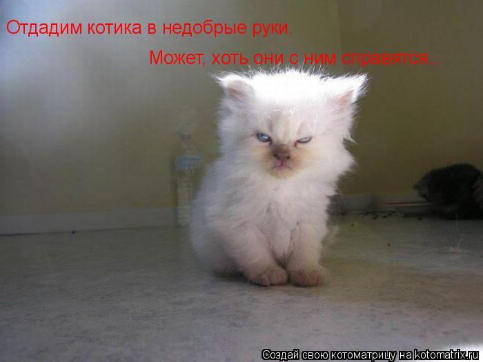 Котоматрица: Отдадим котика в недобрые руки. Может, хоть они с ним справятся...