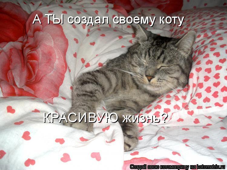 Котоматрица - А ТЫ создал своему коту КРАСИВУЮ жизнь?