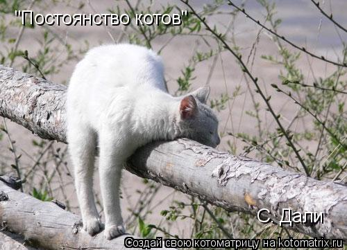 "Котоматрица: ""Постоянство котов"" С. Дали"
