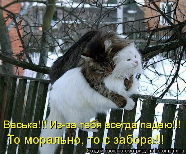 Котоматрица: Васька!!! Из-за тебя всегда падаю!!! То морально, то с забора!!!