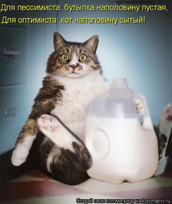 Котоматрица: Для пессимиста: бутылка наполовину пустая, Для оптимиста: кот наполовину сытый!
