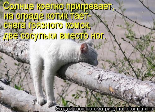 Котоматрица: Солнце крепко пригревает, на ограде котик тает- снега грязного комок, две сосульки вместо ног.