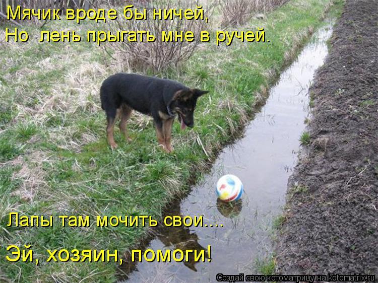 Котоматрица: Мячик вроде бы ничей, Но  лень прыгать мне в ручей. Лапы там мочить свои.... Эй, хозяин, помоги!
