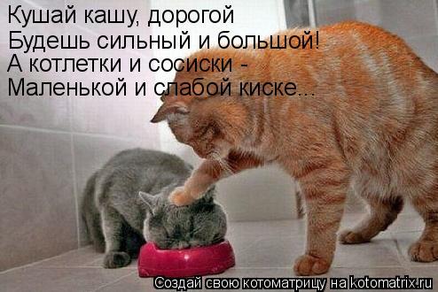 Котоматрица: Кушай кашу, дорогой Будешь сильный и большой! А котлетки и сосиски -  Маленькой и слабой киске...