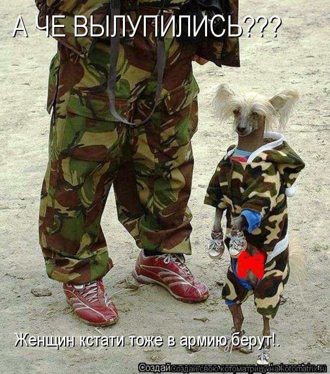 Котоматрица: А ЧЕ ВЫЛУПИЛИСЬ??? Женщин кстати тоже в армию берут!.