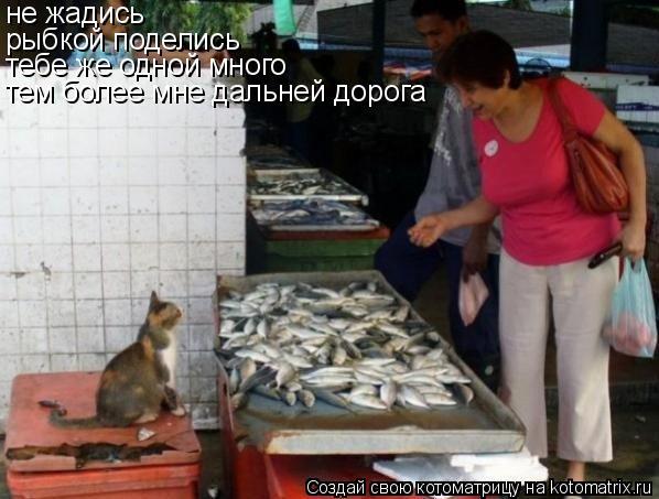 Котоматрица: не жадись рыбкой поделись тебе же одной много тем более мне дальней дорога