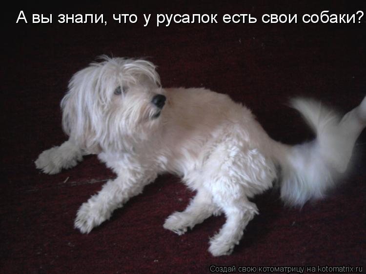 Котоматрица: А вы знали, что у русалок есть свои собаки?