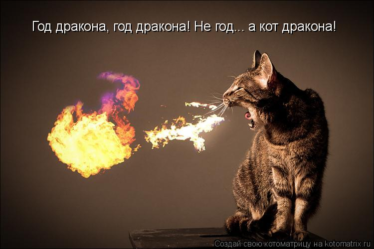 Котоматрица: Год дракона, год дракона! Не год... а кот дракона!