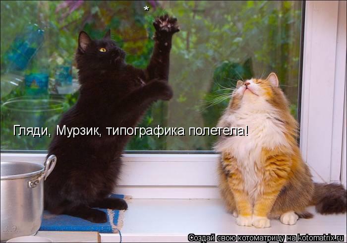 Котоматрица: * Гляди, Мурзик, типографика полетела!